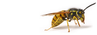 Green Care Wasps and Hornets